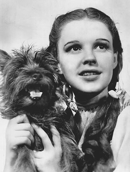 455px-The_Wizard_of_Oz_Judy_Garland_Terry_1939